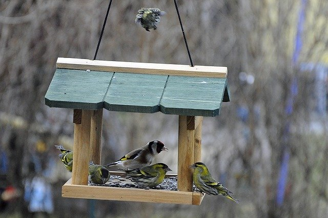 Futterhäuschen für Vögel