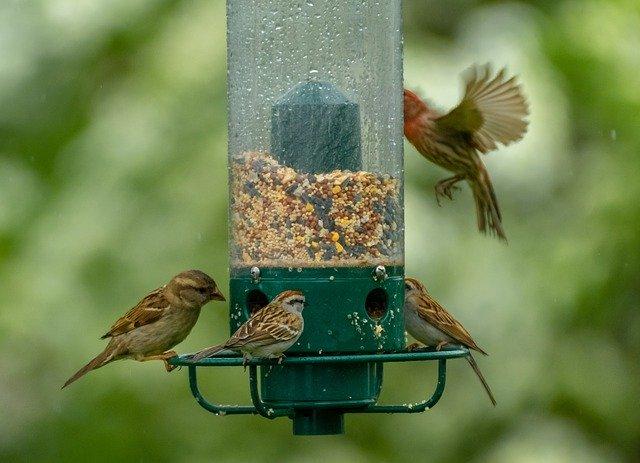 Futtersäule als Futterstation für Vögel