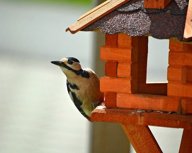 Specht am Vogelfutterhaus