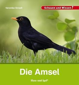 Die Amsel: Schauen und Wissen!